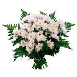 хризантема 11